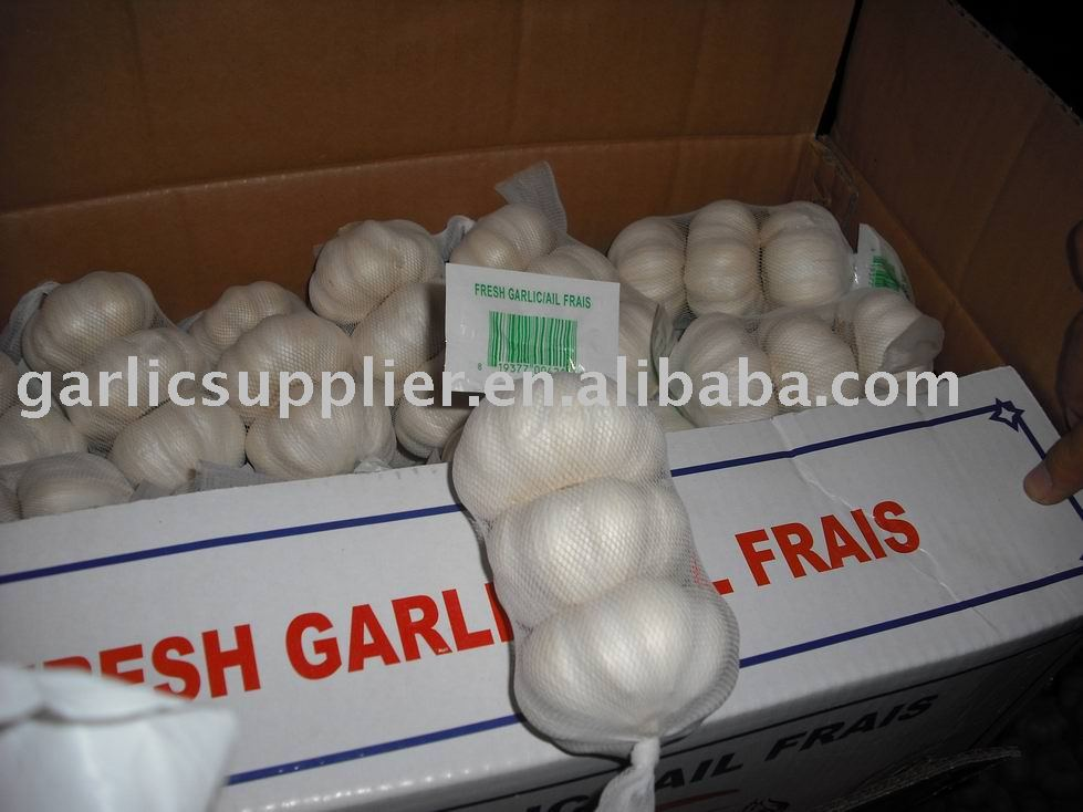 GARLIC OF NEW CROP