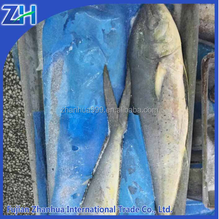 [ Frozen mahi mahi ] fish for sale market South America hot sales for fillettabriz mahi for steak HGT