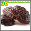 Natural Ganoderma P.E