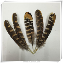 Wholesale Natural Reeves Pheasant Tail Feather