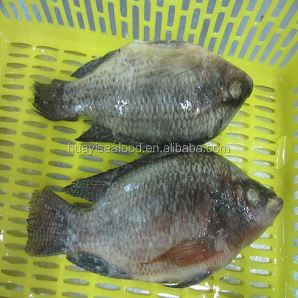 kinds of frozen tilapia fish gutted & scaled