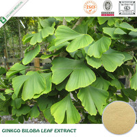 Direct suppplier ginkgo leaf powder pure ginko biloba extract