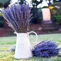 4135 Xun yi cao Hot Sale High Quality Natural Planting Dried Lavender