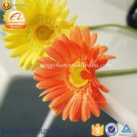 Unique china fresh flowers Ceremony decoration use chrysanthemum flower specials