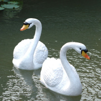 Pretty polyresin swan sculpture, flawless swan