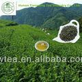 Hot sale China green tea 9371 (for Libya , Egypt , Tunisia , etc)