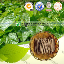 100% organic herb medicine the root bark of white mulberry