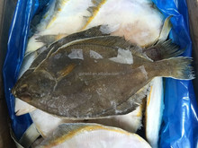 2016 new coming Frozen plaice/flatfish for sale