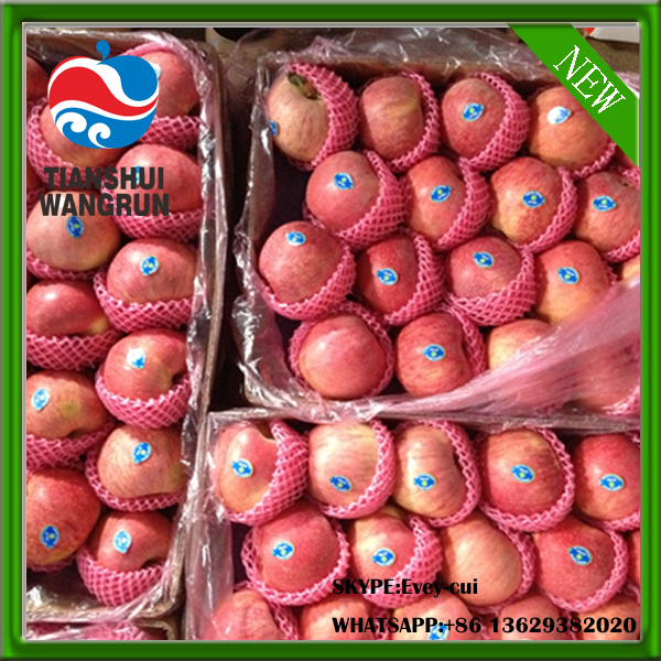 fresh qinguan red qingguan apple price qinguan apple price
