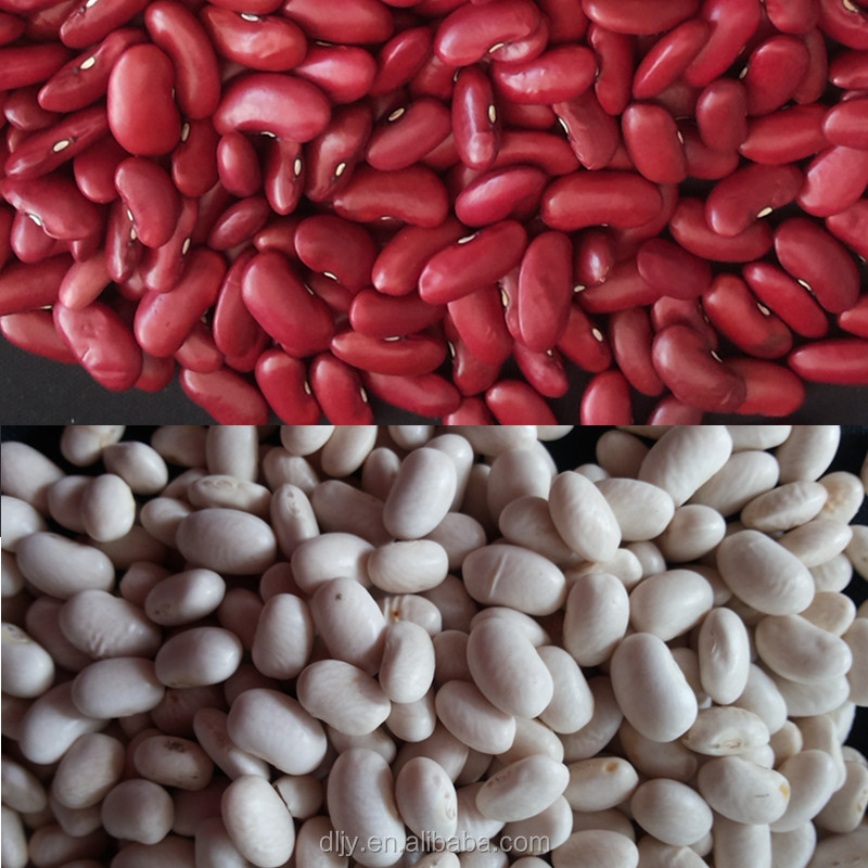 Chinese Kidney Beans ,Red and White Kidney Bean,Factory