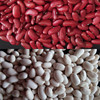 Chinese Kidney Beans Red And White