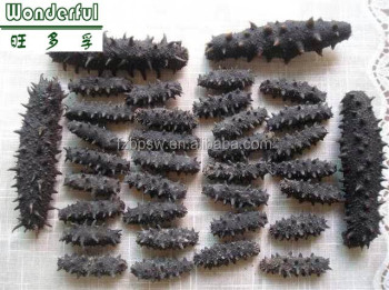 Price dried black prickly sea cucumber