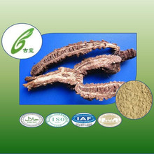 natural herb and pure notopterygium root extract powder