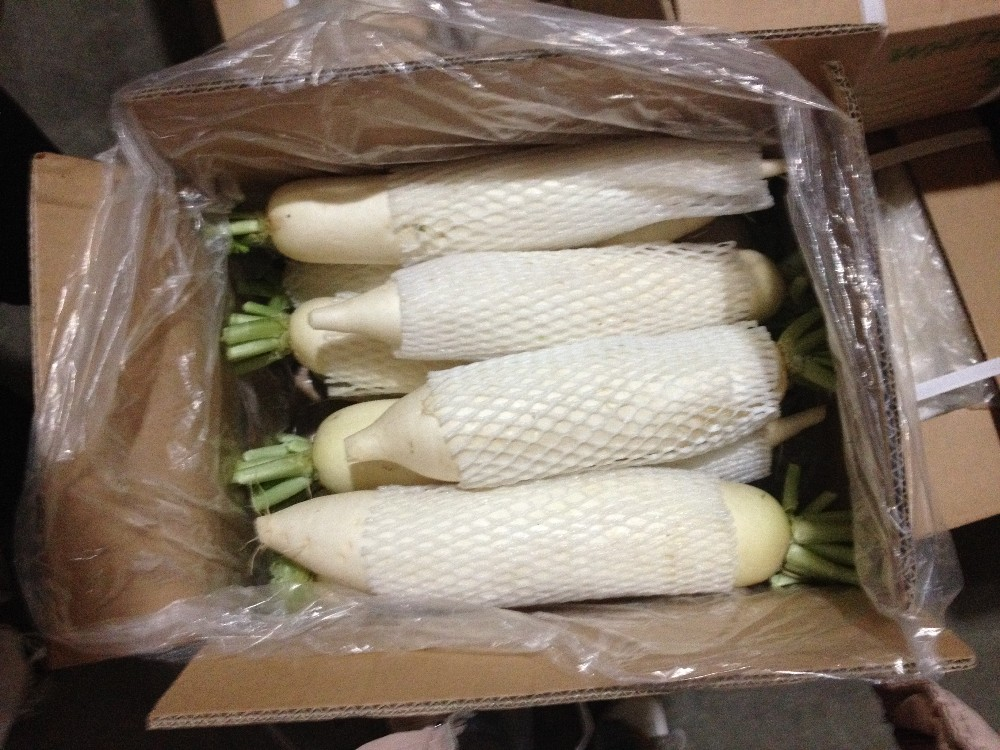 high quality fresh radish/white radish for sale