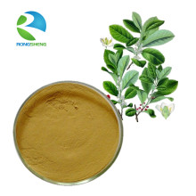 Factory Supply Yerba Mate Extract Powder
