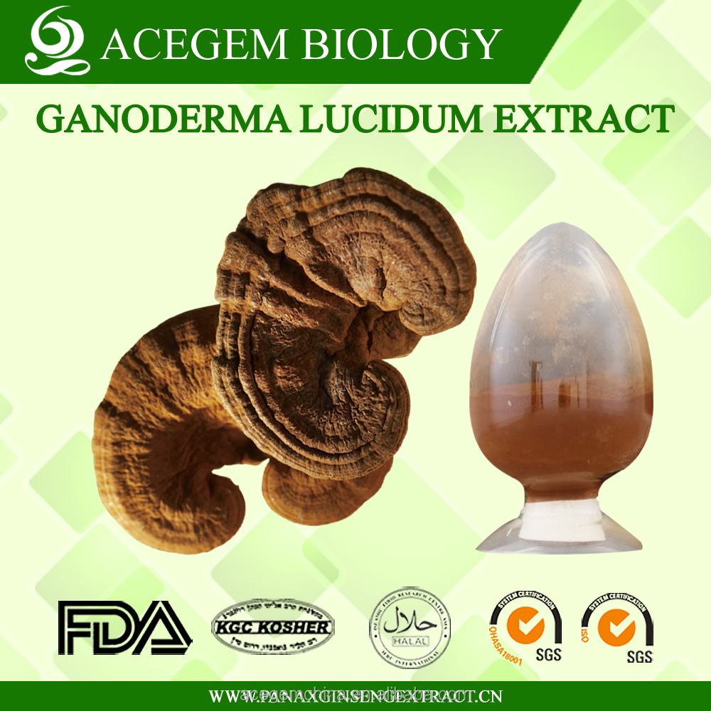 Best Quality Ganoderma Lucidum Mushroom Extract Vs Spores