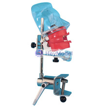 HeyModel Dental bionic head die system