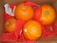 fresh saffron pumpkin