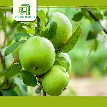 good brand honey green apples new crop gala for sale