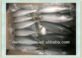 seafood exporter for mackerel 300-500g
