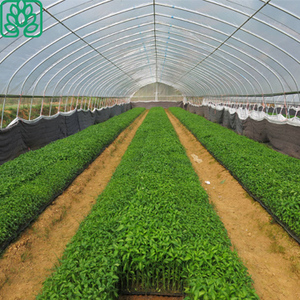 Low Cost Plastic Film Tunnel Greenhouses Hydroponics Agricultural Greenhouse for Sale
