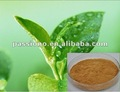 Natural Green Tea Extract Polyphenols 50%, Herbal extract