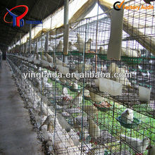 Easy instsllation high quality pigeon cage hot sale