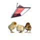 Ceiling wall mounted poultry gas brooder heater for bird chicken