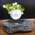 Set your bonsai free in mid-air magic air ornamental plants