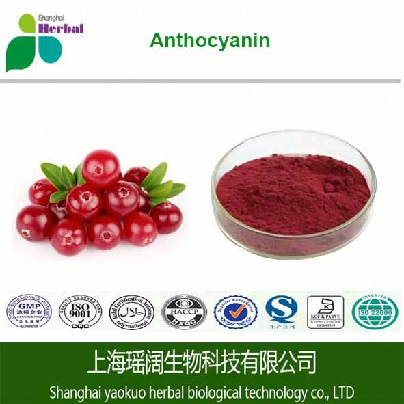 Cranberry Extract Product,American Imported Fruit,Vaccinium Macrocarpon Origin