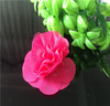 hi-ana artificial flower Clothing accessories ribbons flowers handmade DIY cloth rose Corsage shoes flowers