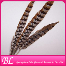 top quality Lady Amherst Pheasant Tail Feathers