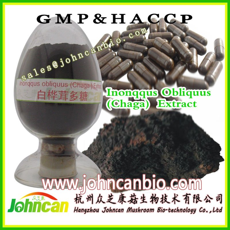 pure natural chaga mushroom extract polysaccharides powder