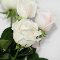 Mothers' day best cut rose for wholesale directly from China
