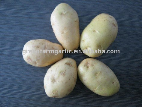 2011 Greenfarm Good price Yellow Holland Potatoes Fresh