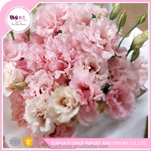 growner provide wholesale home decoration Fresh cut lisianthus flower