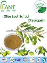 Free Sample Oleuropein 40% Olive Leaf Extract use in Potent immune system supporting function