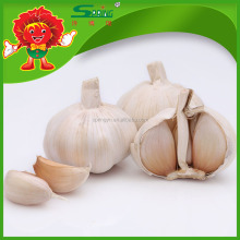 Fresh Chinese pure white garlic for sale