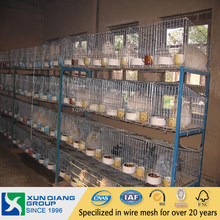 automatic chicken layer cage/chicken egg poultry farm equipment/small chicken