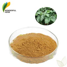 Piper methysticum seeds Kavalactones root extract powder kava kava herb