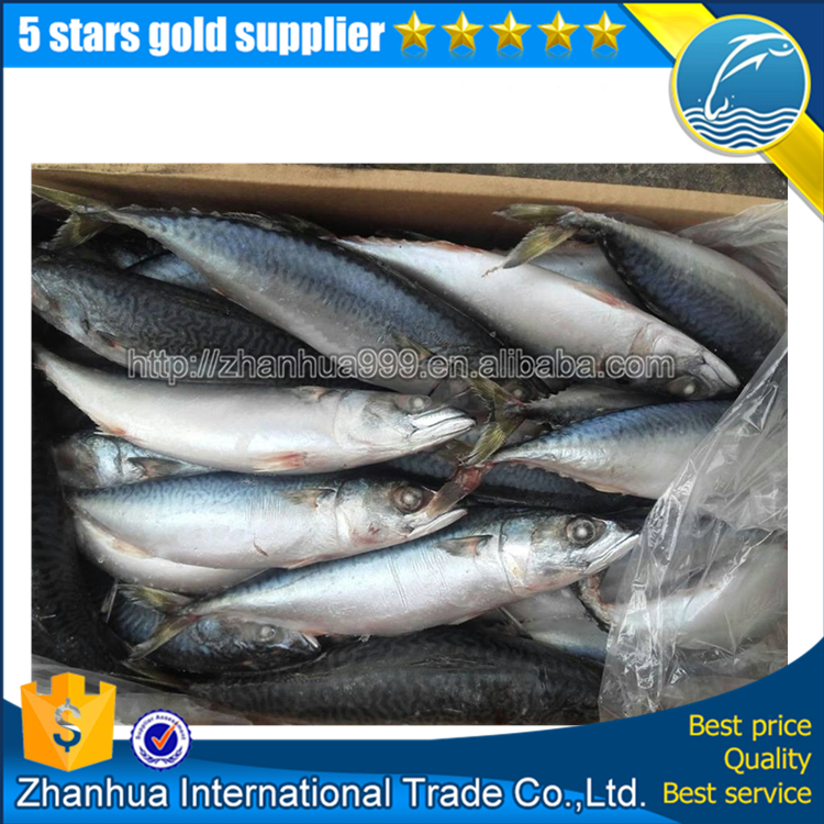 Frozen Pacific Mackerel Scomber Japonicas Fish
