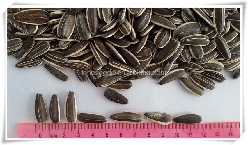 wholesale Chinese sunflower seeds with good price