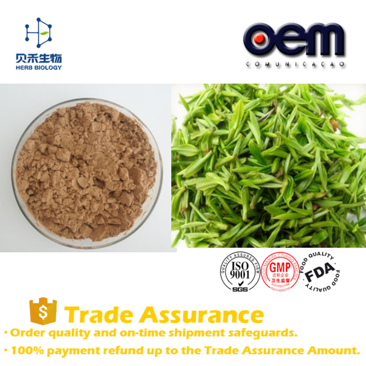 100% Natural pure water soluble green tea powder/bio greentea extract/green tea extract egcg bulk