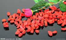 Organic goji berry / dried goji berry / goji berry