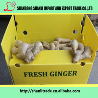 Yellow ginger ,new crop hot sale exporting standard in China