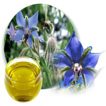 Natural OEM Carrier Oil Pure Borage Seed Oil