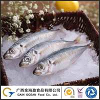 hot sale Wild Caught Blue scad frozen whole fish buyers