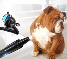 2017 Best selling products dog grooming high quality professional dog pet hair dryer