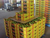 Australian government allowed mangoes