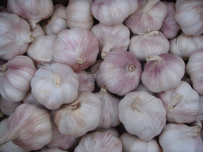 2015 china fresh purple garlic for selling